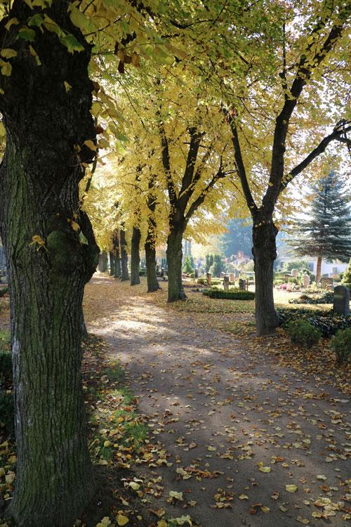 Baumallee-zur-Trauerkapelle_1